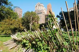 Delusion or Solution: The Practicality of UrbanFarming
