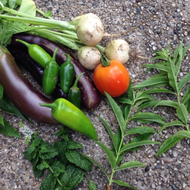Just a few of the beautiful harvested crops of NYU's urban farm.